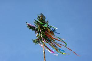 Kirchweihbaum im Wind