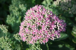 Mit Blumen und Kräutern schenkt Gott uns Freude und Gesundheit