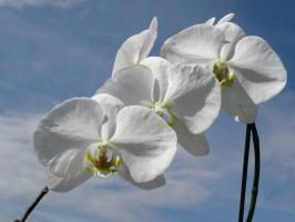 Der Heilige Geist der Wahrheit schenkt Klarheit, Licht und Schönheit