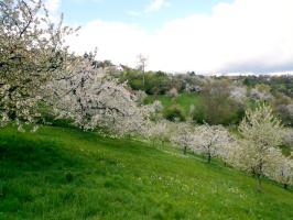 Blick von der Zeltöffnung in die Kirschgärten