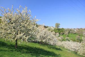 Kirschblüte in Gleisenhof - Markt Neunkirchen   Es kommt der tag, dein Tag erscheint,   da alles neu in Blüte steht;   der Tag, der unsre Feude ist,   der Tag, der uns mit dir versöhnt.   Hymnus zur Laudes in der österlichen Bußzeit