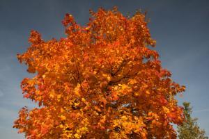 Das Schönste des Herbstes