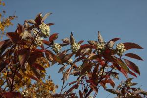 Frucht bringen auch im Herbst des Lebens