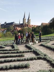 3450 Lavendelsträucher bilden das Labyrinth, in dessen Mitte der Bischofsstab steht.