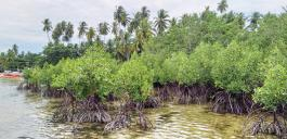 Mangrovenbäume am Ufer